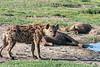 Spotted hyenas (Crocuta crocuta) gathered near a water hole, Ngorongoro caldera, Tanzania