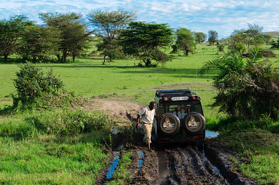 Enroute to the Mara River.  Not all roads are easy to cross