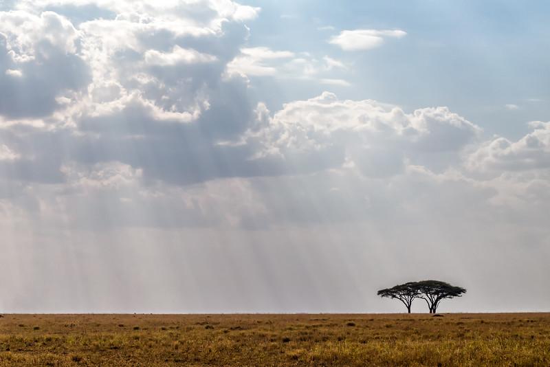 Endless Serengeti - Tanzania