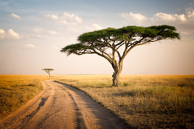 African Journey - Tanzania