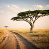 African Journey - Tanzania