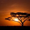 Acacia Tree against sunrise in Tanzania