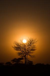 Serengeti Sunrise - Tanzania