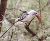 Around The Hornbill