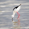 Stilt Looking