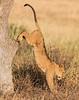 Fancy Feline Footwork