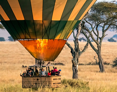 A Serengeti Selfie