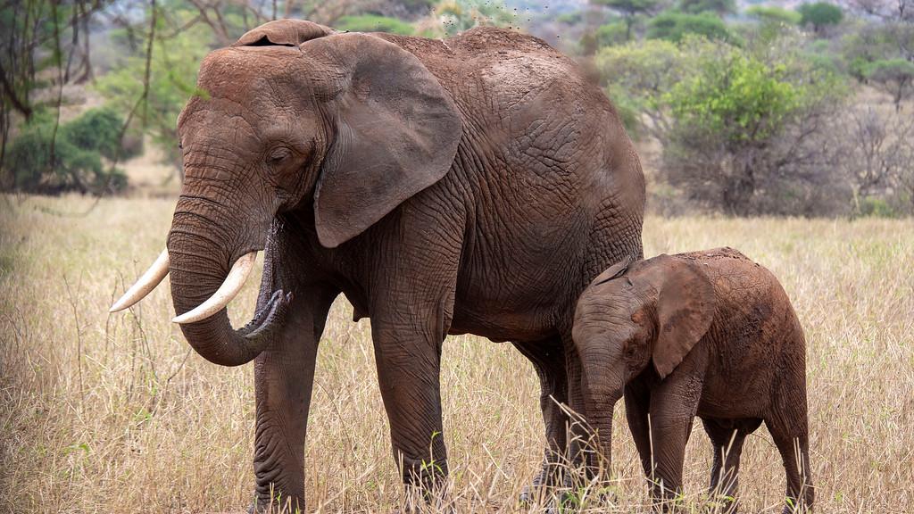 Best Safari in Tanzania: Elephants at Tarangire National Park
