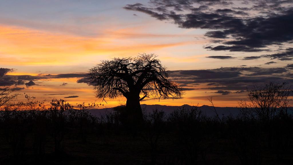 Luxury safari in Tanzania: Sunset at Tarangire National Park