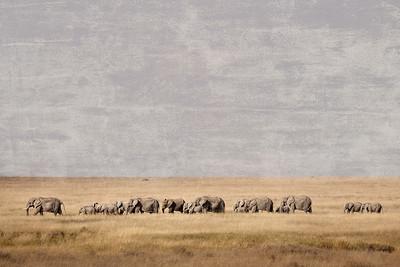 Elephants 7591b