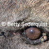 Insects and Hyena Eye