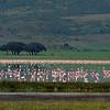 Ngorongoro Flamingos