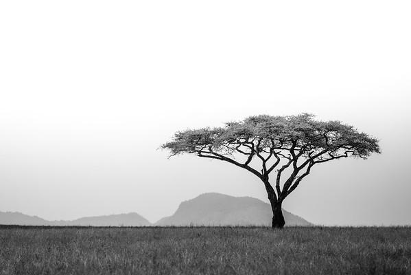 Lone Tree • Tanzania