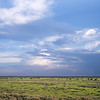 The Serengeti Plains