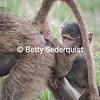 Baby Baboon, Tarangire