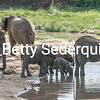 Elephants of All Ages at a Waterhole