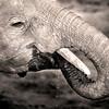 Elephant 0880