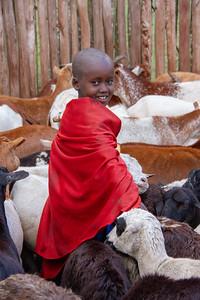 Young Maasai boy weaving through the goats