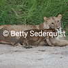 Nuzzling Cub and Mama