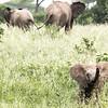 baby elephant trumpeting