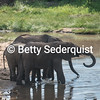 Elephants Silhouetted at Waterhole