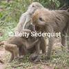 Mama Baboon and Baby