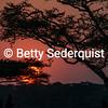 Sunset and Acacia Trees