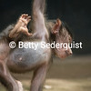Playful Baby Baboon