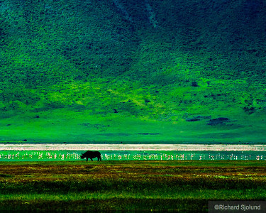 Black Rhino and Flamingos in the Ngorongoro Crater in Tanzania
