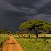 Rainstorm coming closer, Tarangire, Tanzania. Christer Widlund, Febr. 2014.