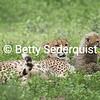 Mama Cheetah and Baby