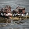 Playing Baby Hippos