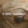 Elephant Eye Closeup