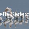 White Pelicans, Lake Manyara