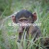 Baby Baboon, Tarangire National Park, Tanzania