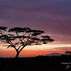 Sunrise 9Feb2015 near Ndutu Safari Lodge: Acacia tree and Ngorongoro Mountains over the Oldupai headwaters. By John A. Worrell<br /> 'The Dawn of Mankind'