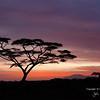 Sunrise 9Feb2015 near Ndutu Safari Lodge: Acacia tree and Ngorongoro Mountains over the Oldupai headwaters. By John A. Worrell<br /> 'The Dawn of Mankind'