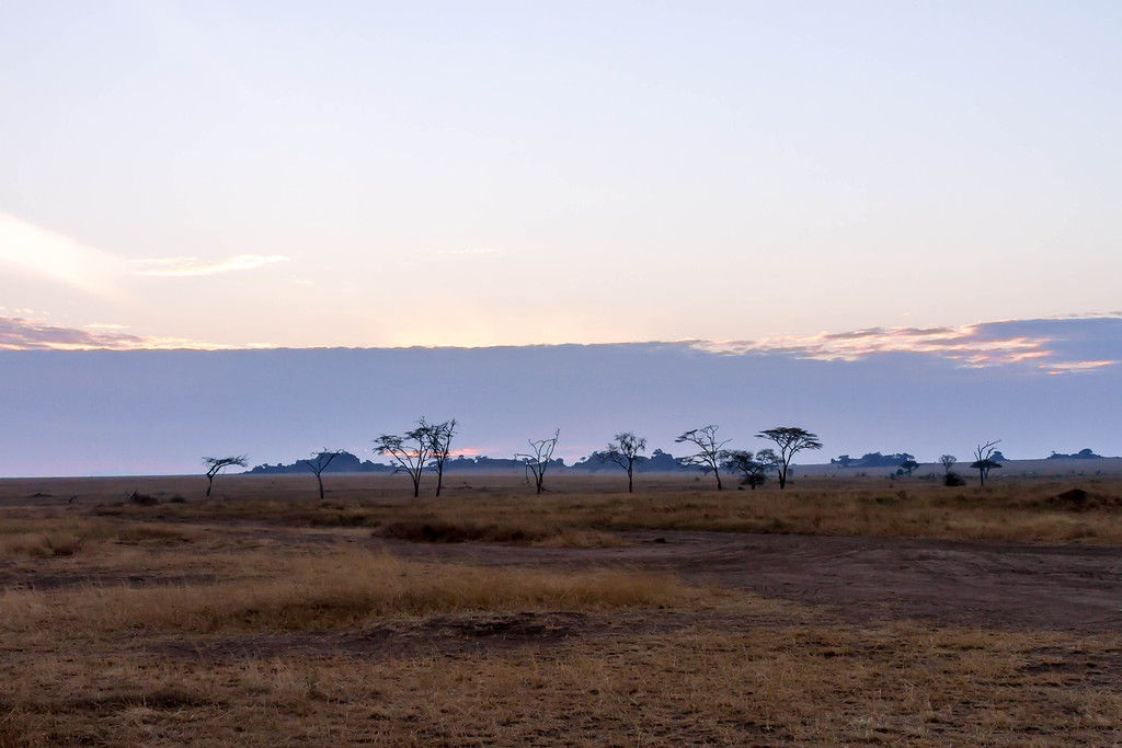 Dawn on the Serengeti Plains
