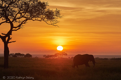 Sunrise on the Serengeti with Elephants
