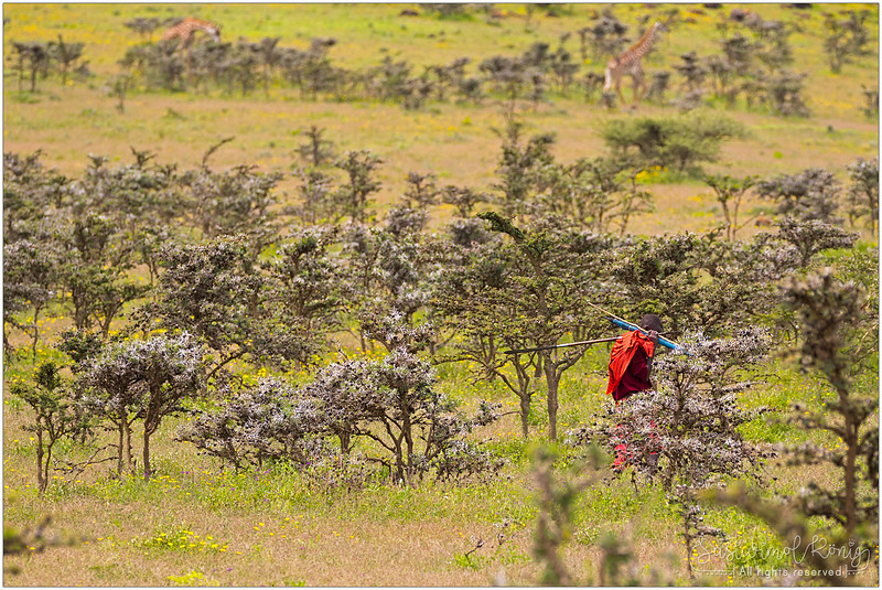 Maasai in red