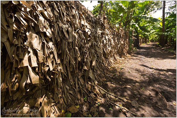 We visited a wood carving workshop. Outside of this place, the wall is made of dried banana leaves. Looks very pleasant to see.