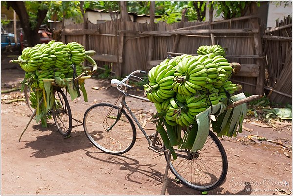 An environmental-friendly way to transport bananas