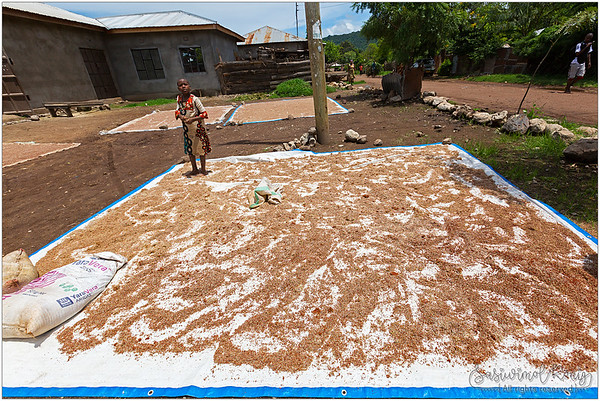 Sun dried millet grains in front of the house in Mto wa Mbu, Tanzania