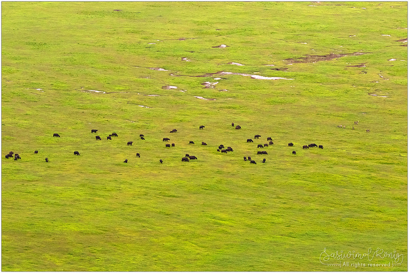 Buffaloes, Zebras.. and probably some more animals I couldn't see with bare eyes