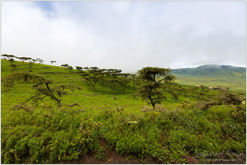 The Acacia trees with moss. Wet and lush and so beautiful !