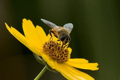 2 2 Ben's bee picture