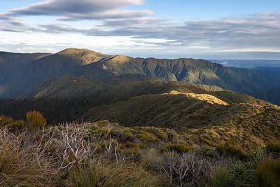 Sub alpine scrub and tops, looking towards Te Matawai Hut and Richards Knob and Twin Peak, Tararua Range