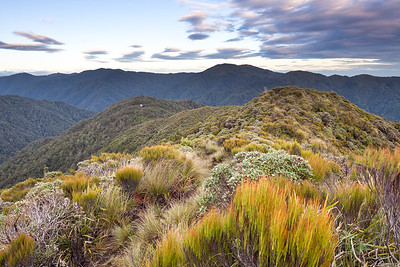 Sub alpine scrub and tops, looking towards Te Matawai Hut, Tararua Range