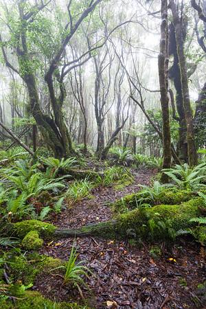 Te Araroa Trail, Waiopehu Track, Tararua Forest Park