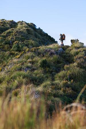 A male Te Araroa tramper walking among sub alpine scrub on Dora Track, Pukematawai, Tararua Forest Park